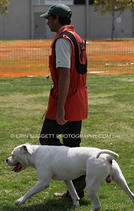 Brevet: Handler Kraig Guay & Tuna. Decoy: Josh McCleary, NARA Level III & Judge: Joel Hubert, NARA  Extreme Ring Dogs host a NARA French Ring Sport competition at Richard Gahr High School in Cerritos, CA on August 13 & 14, 2011 Photos by © Erin Suggett Photography - All Rights Reserved 2011