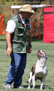 Brevet: Handler, Lance Gentry & Alapaha Bulldog, Tri-tip. Judge: Kadi Thingvall & Decoy: Cary Petersen, NARA Level I  So Cal All Breed Ringers host a NARA French Ring trial at Lake Wohlford Canine Ranch in Valley Center, CA on September 4, 2011. Photography by Erin Suggett - All Rights Reserved 2011