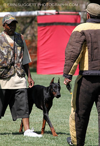 Brevet: Handler, Oscar & Doberman Pinscher, Dillon. Judge: Kadi Thingvall & Decoy: Cary Petersen, NARA Level I  So Cal All Breed Ringers host a NARA French Ring trial at Lake Wohlford Canine Ranch in Valley Center, CA on September 4, 2011. Photography by Erin Suggett - All Rights Reserved 2011