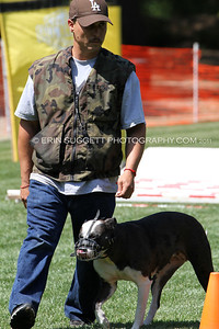 Brevet: Handler, Yedid Miranda & Alapaha Bulldog, Saide. Judge: Kadi Thingvall & Decoy: Cary Petersen, NARA Level I  So Cal All Breed Ringers host a NARA French Ring trial at Lake Wohlford Canine Ranch in Valley Center, CA on September 4, 2011. Photography by Erin Suggett - All Rights Reserved 2011