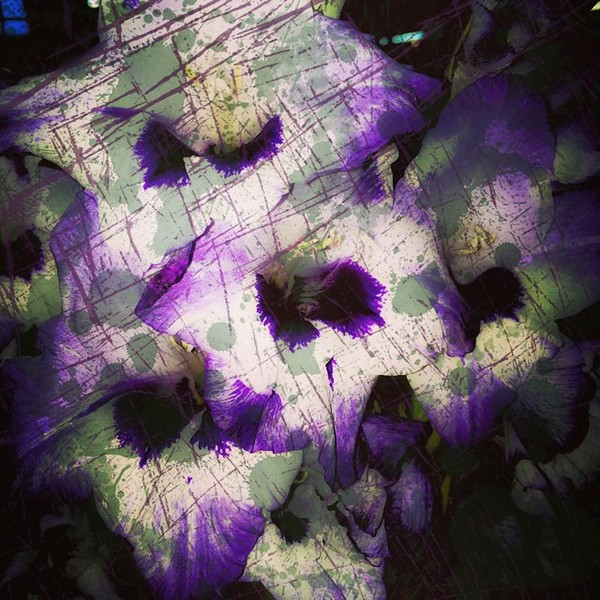 #purple #flowers #abstractart