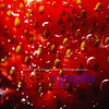 Sparkling fruit in fizzy bubbling water great for backgrounds and health material.