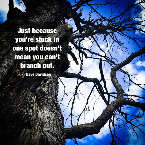 #tree #cloud #instapoem #inspiration #quote #quotophoto #davedavidson