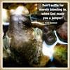 #frog #quote #davedavidson #quotophoto