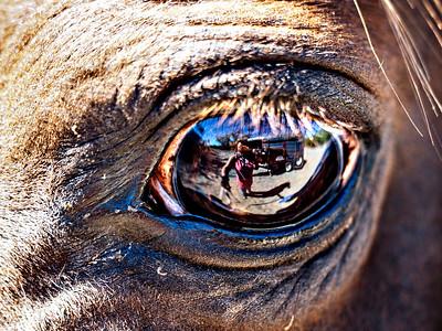 Selfie in the horses eye