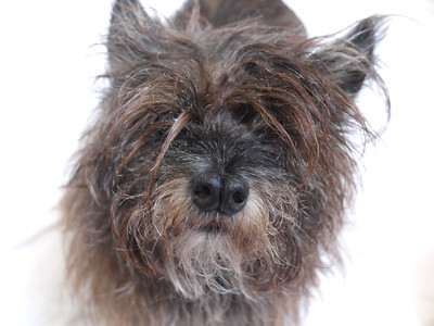 This is Rascal…a Cairn Terrier we rescued… Dog's are all about the frequency of unconditional LOVE… We were graced by his presence. Get your Fixx  @frequencyfixx +1.310.409.9765