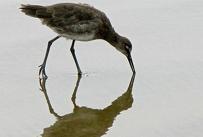 Bird Reflection...