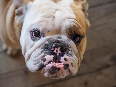 100616_1999 Sully Boo Dog in Idyllwild CA