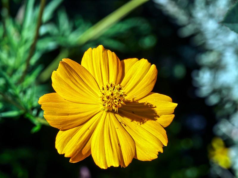 Flowers in WeHo....