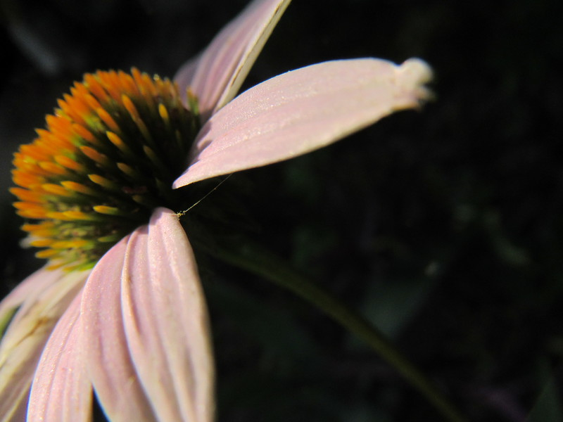A little off but beautiful