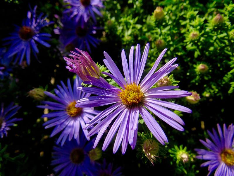 Purple Awareness