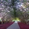 Pink Heaven on Earth