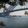 Bridge through the figs