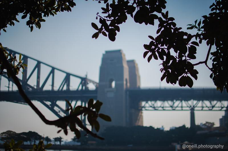 Bridge through the figs II