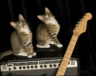 Ok, let's get to jammin' before this cat-nip wears off.