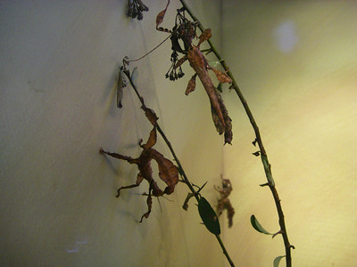 Which are twigs/leaves and which are live insects!