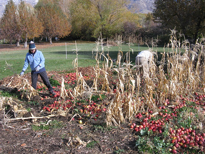 The apples are then fed to the garden - now long past its prime. Great pix of the garden, etc here:  http://gallery.me.com/grasmeyer