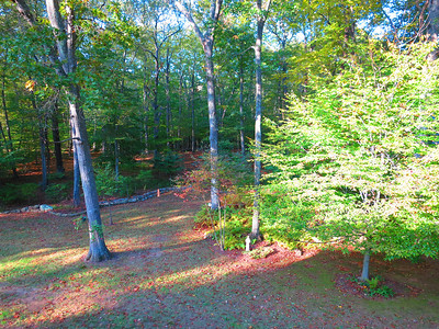 """View off the deck, part of their two-acre """"spread."""" .. Note St Francis statue."""