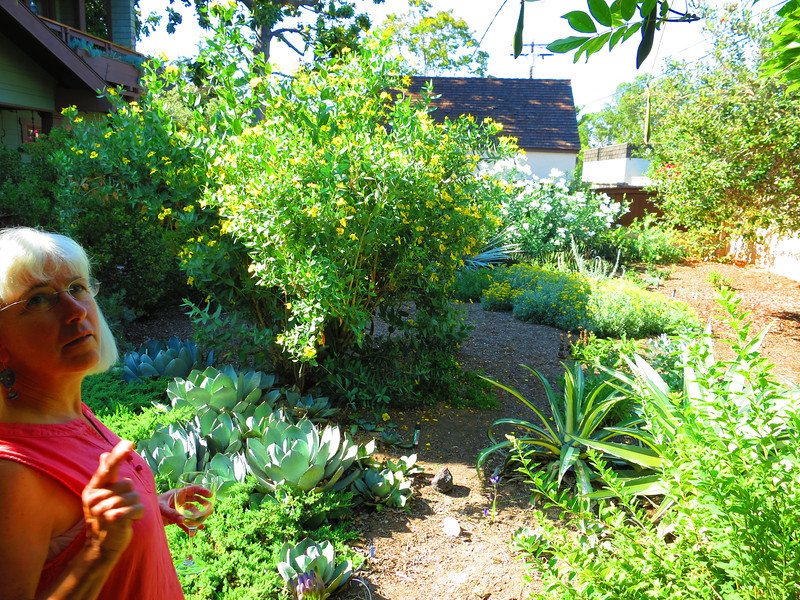 Sunday afternoon in Long Beach - a tour of the Tidball garden.