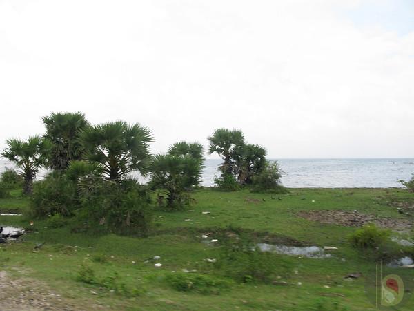 PANNAI  PALAM