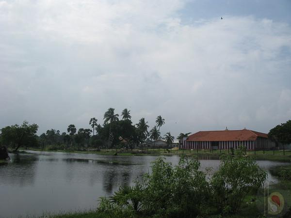 PANNAI  PALAM   MANGUMBAN