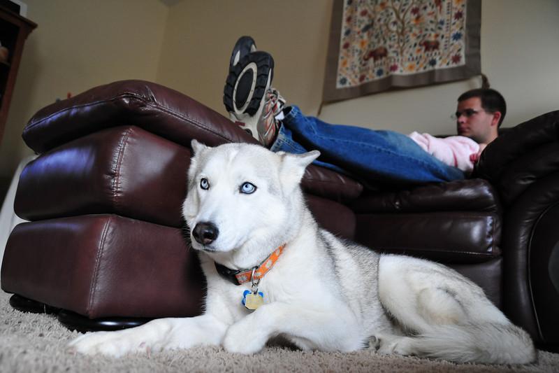 maycee, the guard dog.