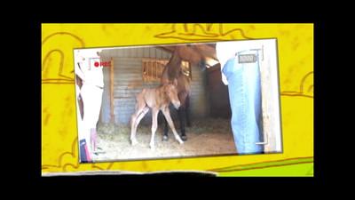 VIDEO-2013-LF-BABY-CLIP-3