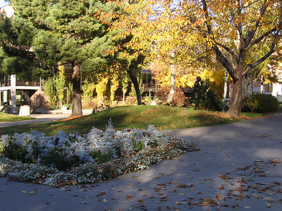 Trees and gardens between the UC center and Mansfield Library on campus. When I was young one side of all these berms were faced with bricks that we used to skateboard on, great fun but a total bust. Some people got tickets and their skateboards confiscated. The day they tore out the bricks I was able to salvage a few.