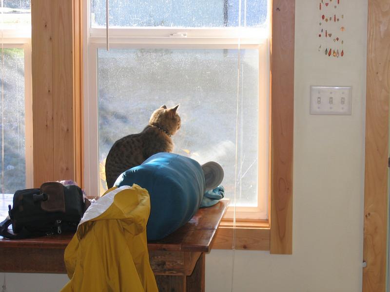 Lulu surveying the yard.