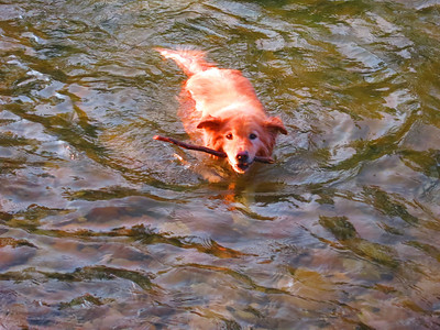 Honey Bear loves the river.