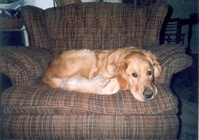 This is Blaze, the sweetest dog ever! He used to wake me up by pushing me out of bed in the morning when I was his and Traci's roomate on Cherry St. I miss those days.