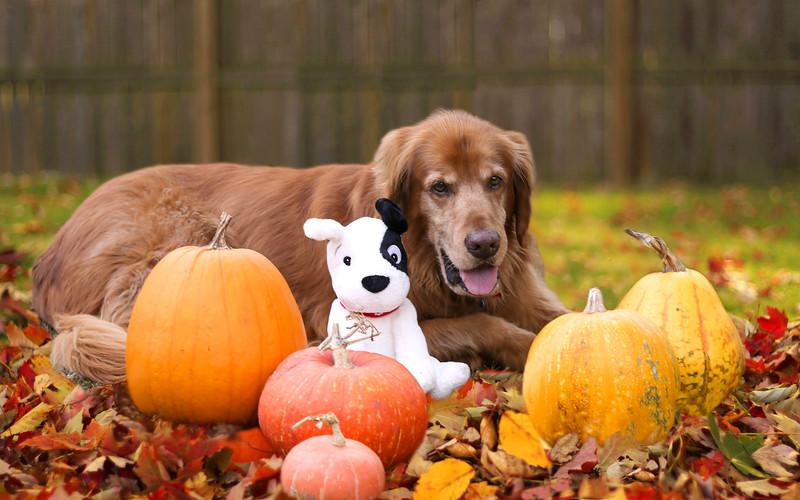 Riley_Sprocket Dog_Pumpkins 2015_Really Final-2