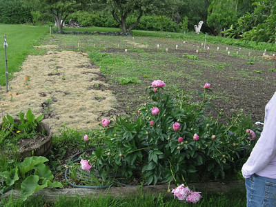 Not much showing in the vegetable garden this early in the season.