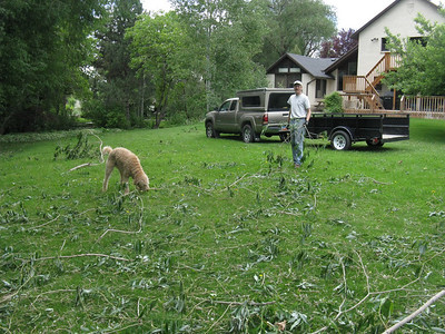 Following some high winds, time to clean up the windfall - too  much for sunny to handle.