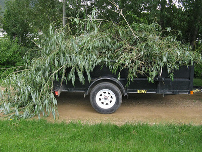 Don't worry - there's plenty of greenery left.