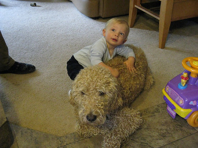 [Sunday morning now.] .. Sunny is very tolerant of Cody, who turned one in April.