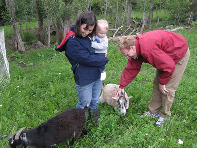 OK, Sat evening, 6/12, after arriving from Moab. .. Checking out the three new kids (L-R): Stormy, Cody and Cloudy.