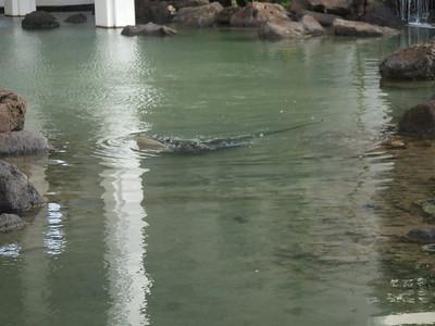 stingray pond!