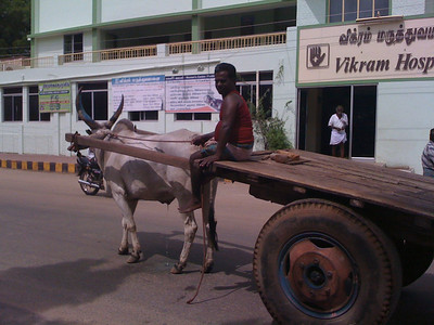 But Madurai was definitely still a rural town. Farm animals roamed the partially paved streets and it was a big mistake wearing my grown up slacks and heels since it was so HOT.