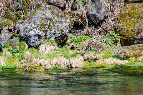 Big Springs, Headwaters of the Snake River
