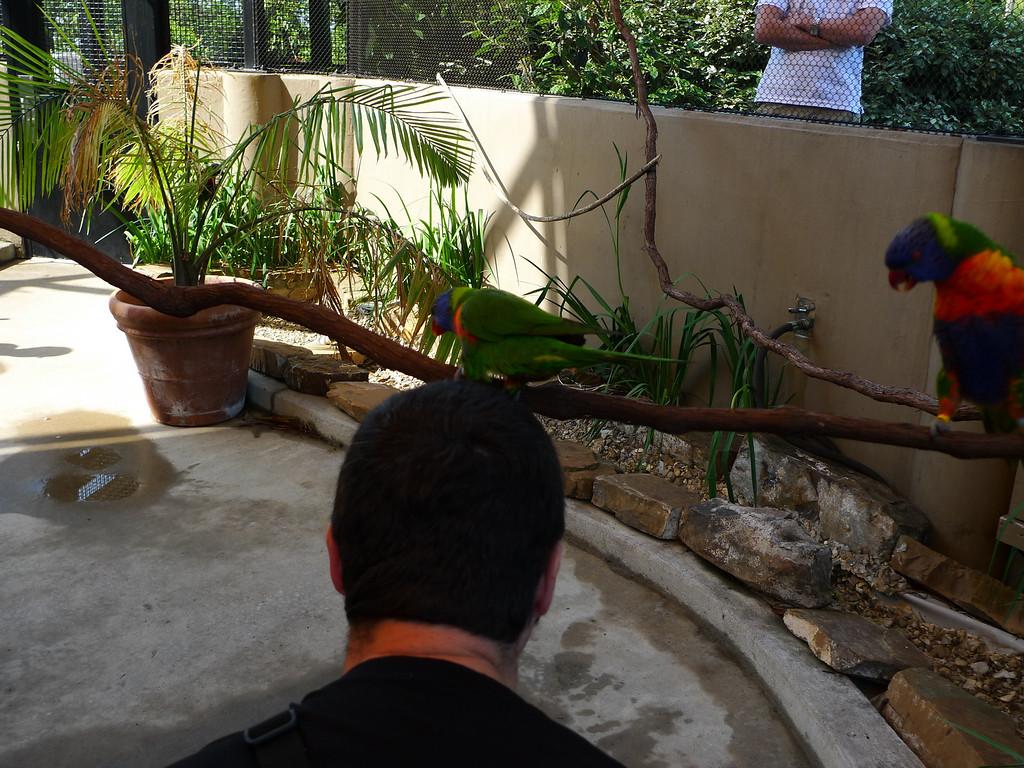 Little Rock Zoo - the birds like david's head.