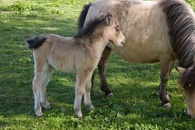 2008-04-05_16-33-03_foss