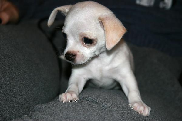 Jaimie's Puppies, January 2006
