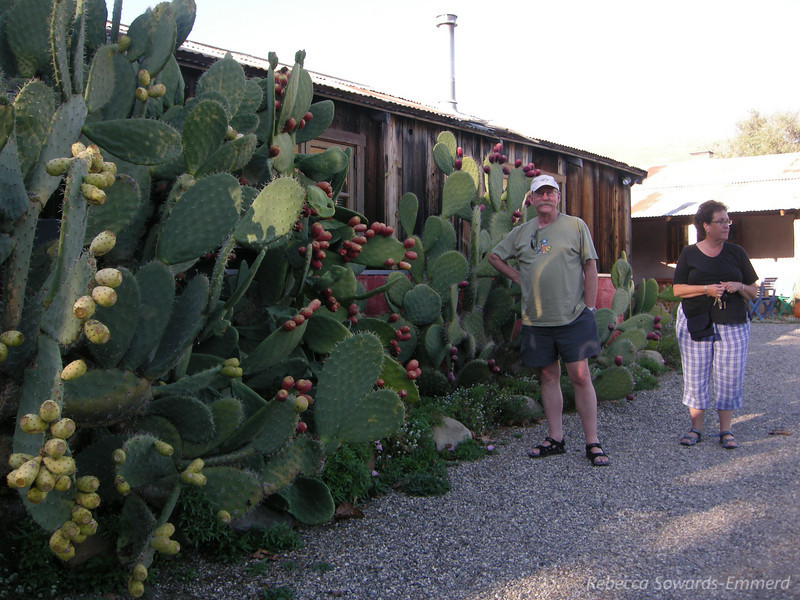 Rick and Corliss by the prickly pear at Alma Rosa