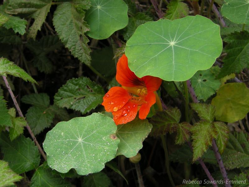 flowerz, todoflowerz
