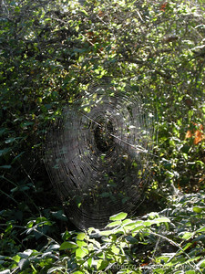 Sunday morning - short dayhike to Las Cruces Hot Spring. Spider web along the trail