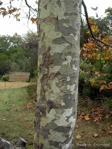 Tree bark patterns