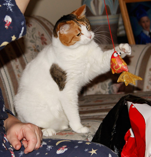 Even the cats got into the holiday spirit. Here Callie plays with a new cat toy.