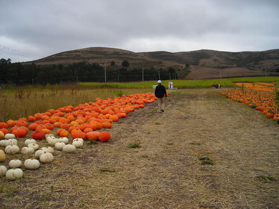 Dave carefully inspects the pumpkins
