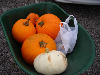 Can't wait to get home and gut these guys. Mmmm....toasted pumpkin seeds.
